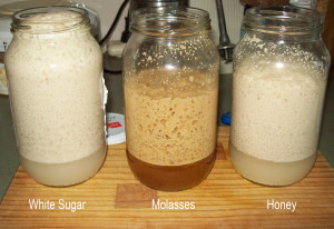 Yeast and Different Sugars
