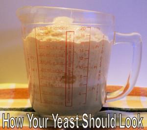 How active yeast should look